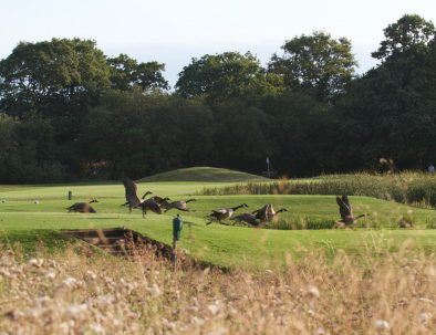 12th tee with visitors
