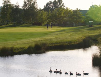 18th green geese on lake