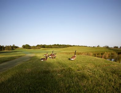 1st fairway with geese